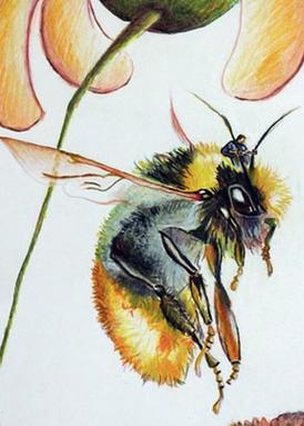 Bumblee bee rider