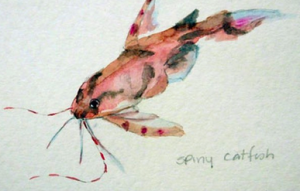 Spiny catfish